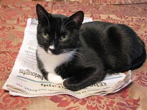 OreoNewspaper.239
