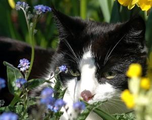 I iz in Ur gardin, eeting Ur Flowerz.