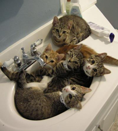 Kitty Sink Party