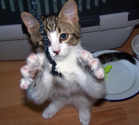 kittynshoelace