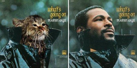 ht-cat-albums-marvin-gaye-thg-130130-gma-jpg_170752